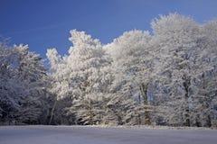 χαμηλότερα Σαξωνία δέντρα τ στοκ εικόνα με δικαίωμα ελεύθερης χρήσης