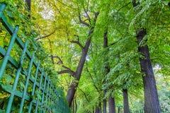 Χαμηλότερη άποψη επάνω σχετικά με τα δέντρα φθινοπώρου στο θερινό κήπο σε Άγιος-Petersbu Στοκ Εικόνα