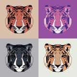 Χαμηλές πολυ ευθυγραμμισμένες τίγρες καθορισμένες Στοκ Εικόνες