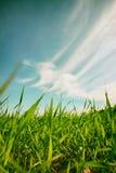 Χαμηλή άποψη γωνίας της φρέσκιας χλόης ενάντια στο μπλε ουρανό με τα σύννεφα έννοια ελευθερίας και ανανέωσης Στοκ φωτογραφία με δικαίωμα ελεύθερης χρήσης