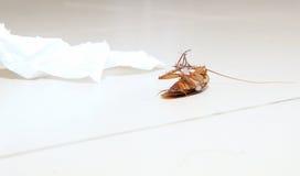 Χαμηλή γωνία που πυροβολείται μιας νεκρής κατσαρίδας στην τουαλέτα πατωμάτων με το έγγραφο ιστού Στοκ εικόνες με δικαίωμα ελεύθερης χρήσης