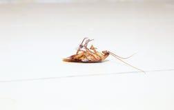 Χαμηλή γωνία που πυροβολείται μιας νεκρής κατσαρίδας στην τουαλέτα πατωμάτων Στοκ φωτογραφία με δικαίωμα ελεύθερης χρήσης