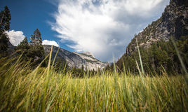 Χαμηλή γωνία χλόης Yosemite Στοκ Φωτογραφία