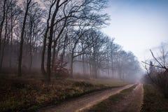 Χαμηλή ομίχλη Στοκ Εικόνες