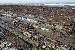 Χαμηλή παλίρροια στην ατλαντική ακτή της γαλλικής βασκικής χώρας Στοκ εικόνες με δικαίωμα ελεύθερης χρήσης