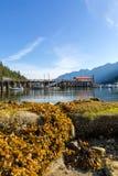 Χαμηλή παλίρροια στον πεταλοειδή κόλπο Καναδάς μια ηλιόλουστη ημέρα στοκ εικόνες
