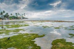Χαμηλή παλίρροια στον ωκεανό Στοκ εικόνες με δικαίωμα ελεύθερης χρήσης