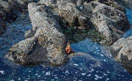 Χαμηλή παλίρροια σωρών ψαριών και θάλασσας αστεριών Στοκ Φωτογραφία