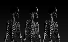 Χαμηλή πολυ πλάγια όψη πορτρέτου σκελετών στο συγκρατημένο φωτισμό Στοκ Εικόνες