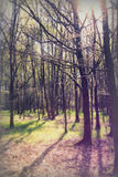 Χαμηλός ήλιος μέσω των δέντρων στα ξύλα Στοκ Φωτογραφίες