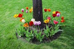 Χαμηλότερο λιβάδι στο πάρκο Στοκ φωτογραφία με δικαίωμα ελεύθερης χρήσης