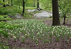 Χαμηλότερο λιβάδι στο πάρκο Στοκ εικόνα με δικαίωμα ελεύθερης χρήσης