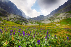 Χαμηλότερο μέρος του υψηλού βουνού Στοκ Φωτογραφίες