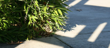 Χαμηλό μπαμπού κατά μήκος μιας σκιασμένης πορείας Στοκ φωτογραφίες με δικαίωμα ελεύθερης χρήσης