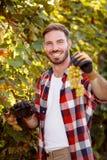 Χαμογελώντας αγρότης που συγκομίζει τα σταφύλια Στοκ Φωτογραφία