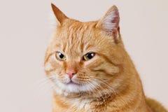 Χαμογελώντας τη γάτα με το κακό κοιτάξτε στοκ εικόνα με δικαίωμα ελεύθερης χρήσης