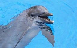 Χαμογελώντας δελφίνι Στοκ φωτογραφία με δικαίωμα ελεύθερης χρήσης