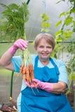 Χαμογελώντας συνταξιούχος με το καρότο στο θερμοκήπιο Στοκ Φωτογραφία