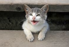 χαμόγελο γατακιών Στοκ φωτογραφία με δικαίωμα ελεύθερης χρήσης