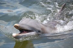χαμόγελο δελφινιών στοκ εικόνες με δικαίωμα ελεύθερης χρήσης