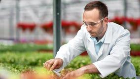 Χαμόγελο του επαγγελματικού γεωργικού χύνοντας λιπάσματος επιστημόνων από το σωλήνα γυαλιού στις οργανικές εγκαταστάσεις φιλμ μικρού μήκους