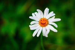 χαμόγελο λουλουδιών Στοκ Εικόνα