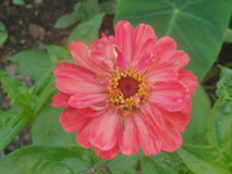 χαμόγελο λουλουδιών Στοκ φωτογραφία με δικαίωμα ελεύθερης χρήσης