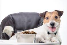 Χαμόγελο του κατοικίδιου ζώου με το κύπελλο των τροφίμων σκυλιών στην καρέκλα μωρών Στοκ εικόνα με δικαίωμα ελεύθερης χρήσης