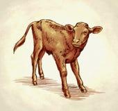 Χαράξτε το μελάνι σύρει την απεικόνιση αγελάδων Στοκ Εικόνες