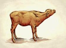 Χαράξτε το μελάνι σύρει την απεικόνιση αγελάδων Στοκ Εικόνα