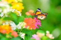 χαρά κήπων πεταλούδων Στοκ Εικόνες