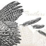 Χαραγμένο διάνυσμα υπόβαθρο μόδας φτερών Στοκ Εικόνες