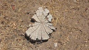 Χαραγμένο ξύλο κολόβωμα στο χώμα Στοκ φωτογραφία με δικαίωμα ελεύθερης χρήσης