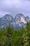 Χαρακτηρισμένη φυσιογνωμία, βουνό Tianzhu, επαρχία AnHui, Κίνα Στοκ εικόνα με δικαίωμα ελεύθερης χρήσης