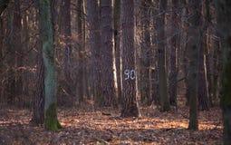 χαρακτηρισμένο δέντρο Στοκ Εικόνες