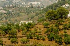 Χαρακτηριστικά ισπανικά του χωριού σπίτια και καλλιεργήσιμο έδαφος στους λόφους του anda Στοκ Φωτογραφία