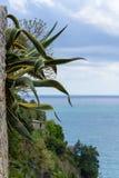 Χαρακτηριστική μεσογειακή βλάστηση, σε έναν βράχο στη θάλασσα στοκ εικόνα