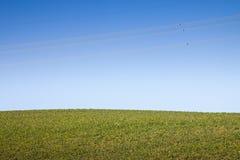 Χαρακτηριστικός Tuscan λόφος ενάντια σε έναν μπλε ουρανό με τα ηλεκτρικά καλώδια στο ι Στοκ Φωτογραφία