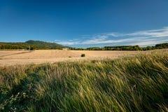 Χαρακτηριστικό γαλλικό τοπίο το καλοκαίρι με τους τομείς σιταριού Στοκ φωτογραφία με δικαίωμα ελεύθερης χρήσης