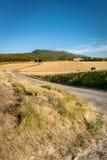 Χαρακτηριστικό γαλλικό τοπίο το καλοκαίρι με τους τομείς σιταριού Στοκ εικόνες με δικαίωμα ελεύθερης χρήσης