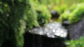 Χαρακτηριστικό γνώρισμα νερού και εγκαταστάσεις πρασίνων με τον κατευναστικό ήχο της πηγής στον κήπο φιλμ μικρού μήκους