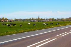 Χαρακτηριστικό ολλανδικό τοπίο με το καλλιεργήσιμο έδαφος αγελάδων και ένα αγροτικό σπίτι Στοκ Εικόνες