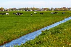 Χαρακτηριστικό ολλανδικό τοπίο με το καλλιεργήσιμο έδαφος αγελάδων και ένα αγροτικό σπίτι Στοκ Φωτογραφία