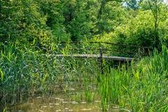 Χαρακτηριστικό τοπίο στην περιοχή ελών του αυτοκρατορικού bara Carska λιμνών, μεγάλος φυσικός βιότοπος για τα πουλιά και άλλα ζώα στοκ εικόνα με δικαίωμα ελεύθερης χρήσης