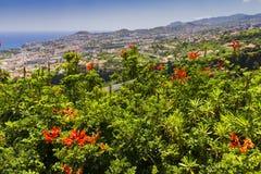 Χαρακτηριστικό τοπίο της Πορτογαλίας νησιών της Μαδέρας, άποψη πανοράματος πόλεων του Φουνκάλ από το βοτανικό κήπο, ευρεία γωνία Στοκ Φωτογραφία
