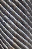 Χαρασμένη μάρμαρο μακροεντολή στηλών Στοκ Εικόνες