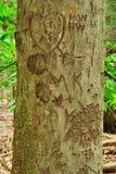 χαρασμένος κορμός δέντρων καρδιών Στοκ Εικόνες