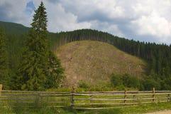 Χαρασμένο δάσος στο βουνό Carpathians Στοκ Εικόνες