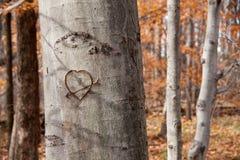 χαρασμένο δέντρο καρδιών Στοκ φωτογραφία με δικαίωμα ελεύθερης χρήσης