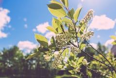 Χαριτωμένα άσπρα λουλούδια Στοκ Φωτογραφία